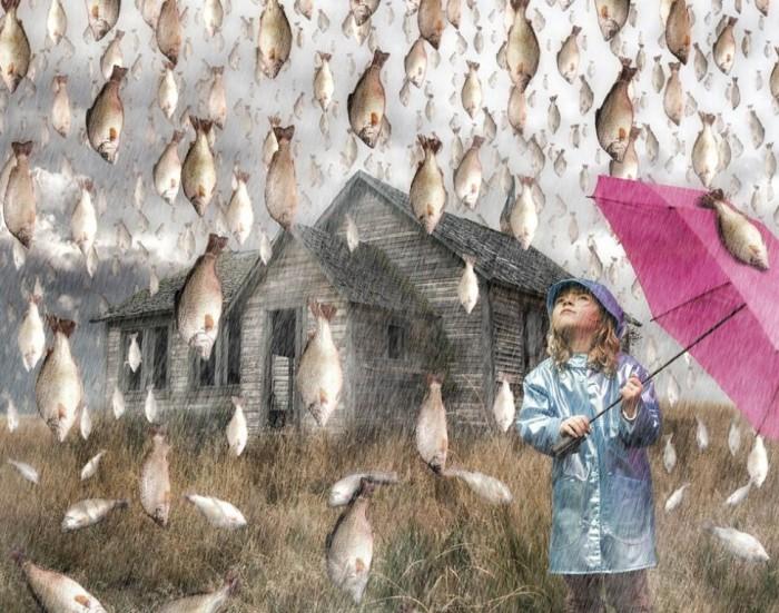 Rain-of-fish Believe It or Not! It Is Raining Fish in Honduras Instead of Water Drops
