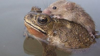 Photo of A Frog Saves a Tiny Rat from Certain Death