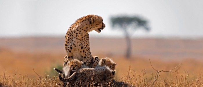 South-Africa-CheetahCubs.jpg Adventure Travel Destinations to Enjoy an Unforgettable Holiday