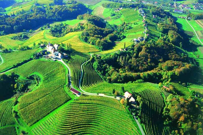 Viticulture-And-Winemaking-In-Slovenia Adventure Travel Destinations to Enjoy an Unforgettable Holiday