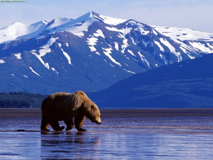 alaskaimage2 Adventure Travel Destinations to Enjoy an Unforgettable Holiday