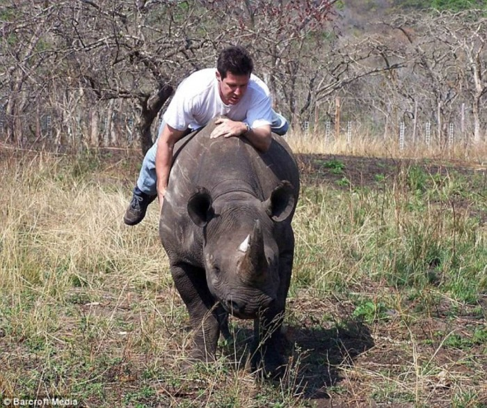 article-2130075-129AF6F2000005DC-75_634x531 The Western Black Rhinoceros Declared Extinct Because of Heavy Poaching