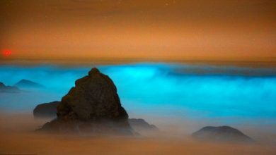 Photo of Magnificent and Breathtaking Blue Waves that Glow at Night