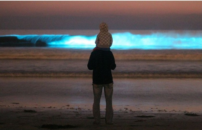 article_0_0E24007E00000578_171 Magnificent and Breathtaking Blue Waves that Glow at Night