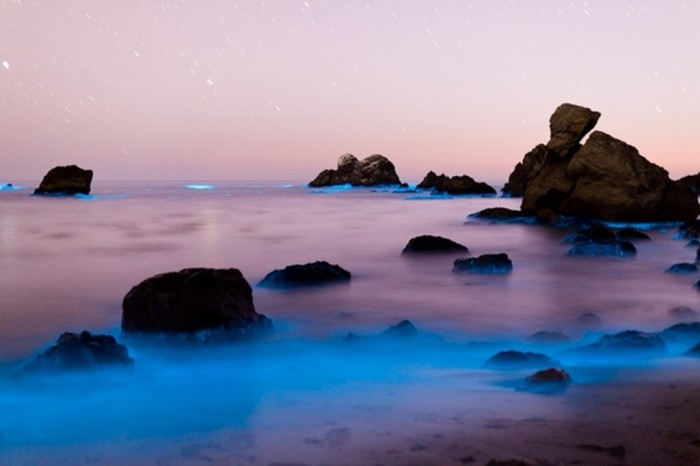 bluesea Magnificent and Breathtaking Blue Waves that Glow at Night