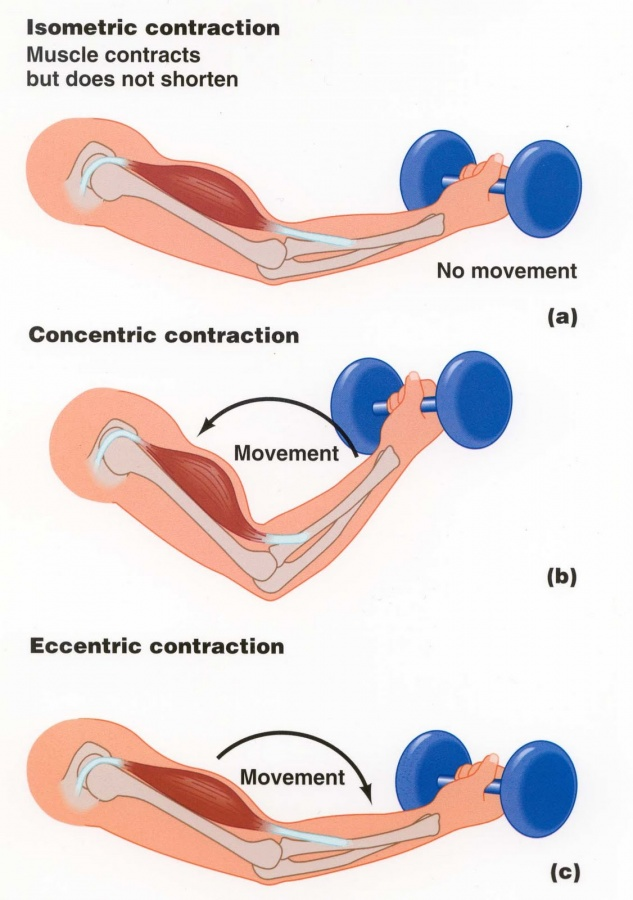contractions Metabolic Cycling Tricks for Fat Loss