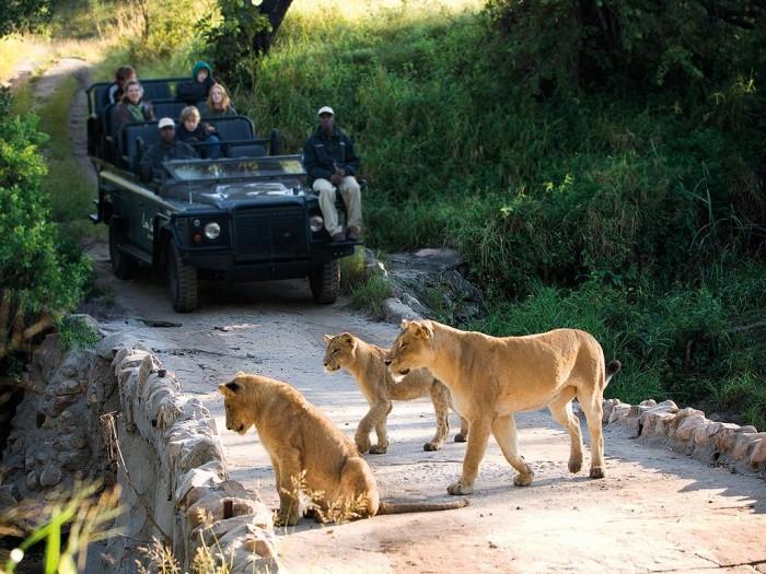 item0.size_.lion-sands-sabi-sand-kruger-nat-l-park-kruger-nat-l-park-south-africa-108016-2 Adventure Travel Destinations to Enjoy an Unforgettable Holiday