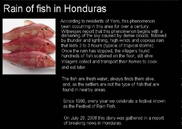 maxresdefault Believe It or Not! It Is Raining Fish in Honduras Instead of Water Drops