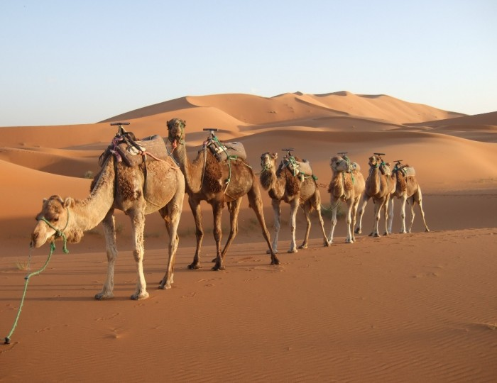 morocco-desert-camel Adventure Travel Destinations to Enjoy an Unforgettable Holiday