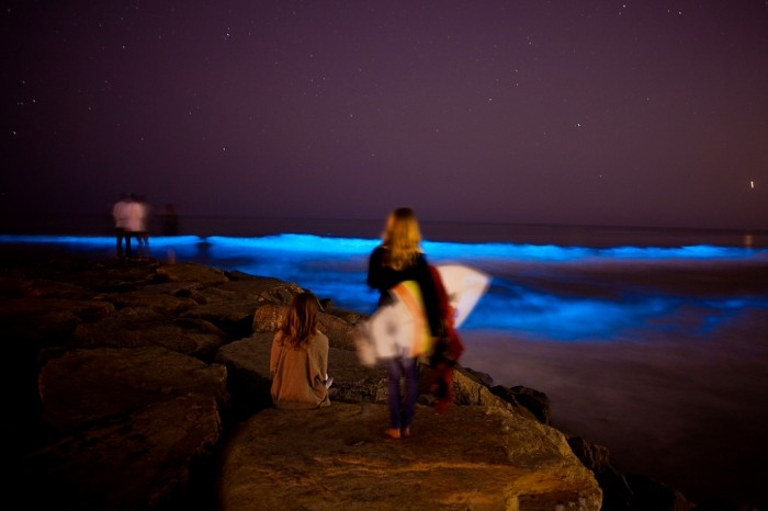 orange-county520-71 Magnificent and Breathtaking Blue Waves that Glow at Night