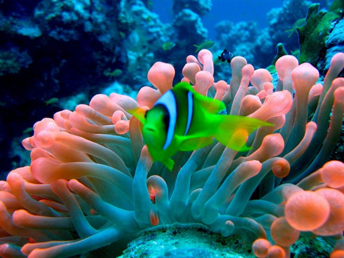 red-sea Adventure Travel Destinations to Enjoy an Unforgettable Holiday