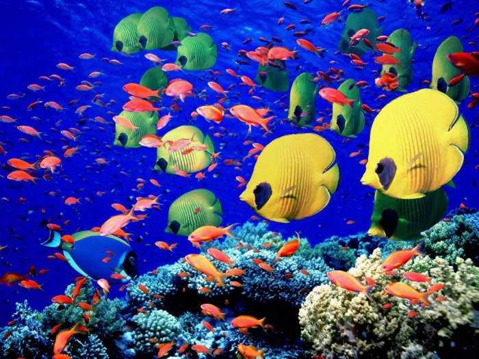 redsea Adventure Travel Destinations to Enjoy an Unforgettable Holiday