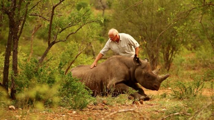 rhino3 The Western Black Rhinoceros Declared Extinct Because of Heavy Poaching