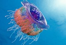 Photo of Be Careful! Deadly Jellyfish That Can Kill You While Swimming