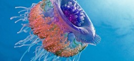 Be Careful! Deadly Jellyfish That Can Kill You While Swimming