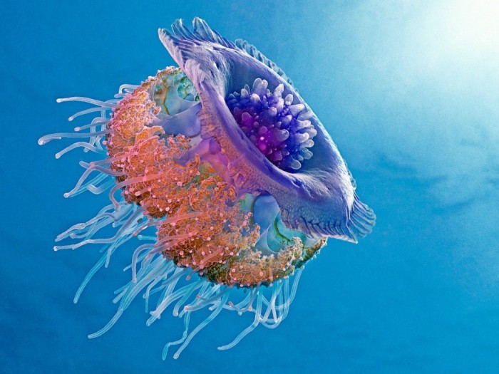 sUEMk Be Careful! Deadly Jellyfish That Can Kill You While Swimming