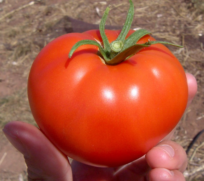 t2 7 Amazing Health Facts About Tomatoes