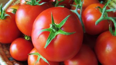 Photo of 7 Amazing Health Facts About Tomatoes