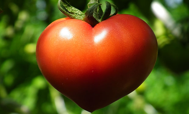 t7 7 Amazing Health Facts About Tomatoes