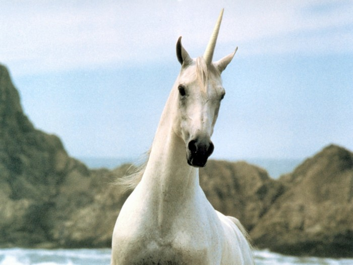unicorn-realistic Know 10 Points Of Information About The Unicorn