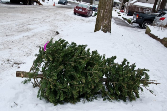 5352813359_c7593a0fd0_b Did You Throw Your Christmas Tree? If It Is Not, Don't Do This