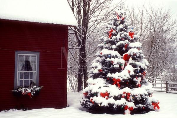 7988A1887 79 Amazing Christmas Tree Decorations