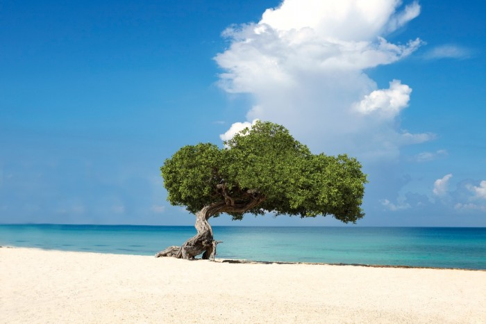ARUBA_Fofoti_Trees Top 10 Romantic Vacation Spots for Couples to Enjoy Unforgettable Time