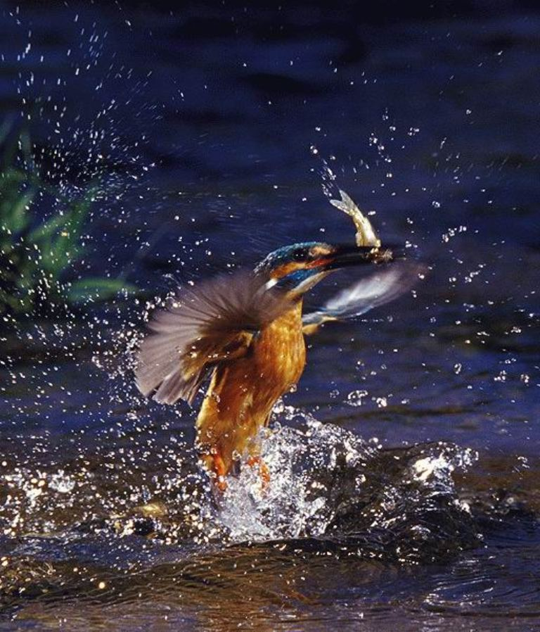 Amazing-photography-of-Kingfisher-bird Improve Your Photography Skills Following These Tips