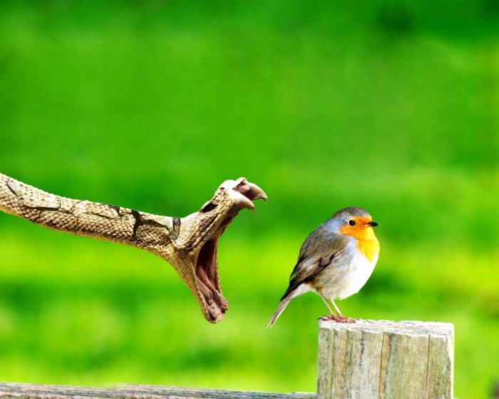 Animals_Birds_Bird_and_snake_004698_ Improve Your Photography Skills Following These Tips