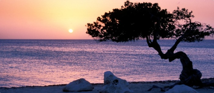 Aruba-960-x-420 Top 10 Romantic Vacation Spots for Couples to Enjoy Unforgettable Time