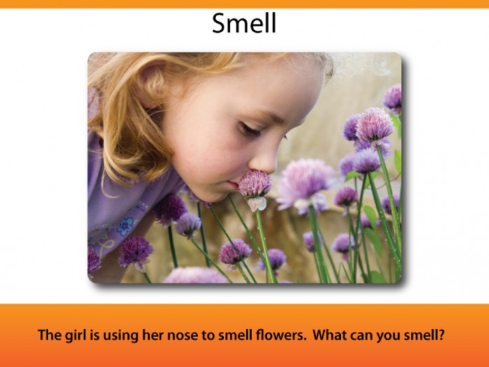 Example-Page-Smell Do You Know How to Train Your Child to Use the Five Senses?