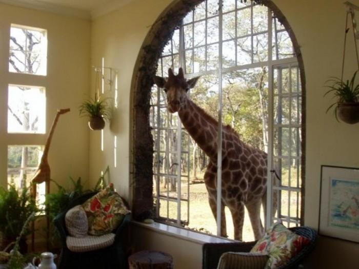 GiraffeManor03-640x480 Top 30 World's Weirdest Hotels ... Never Seen Before!