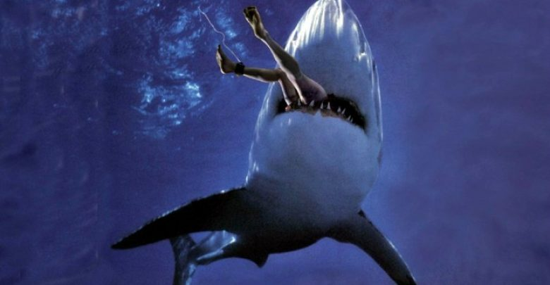 Photo of Is It True: Great White Sharks Should Keep Swimming all the time in Order Not to Drown?