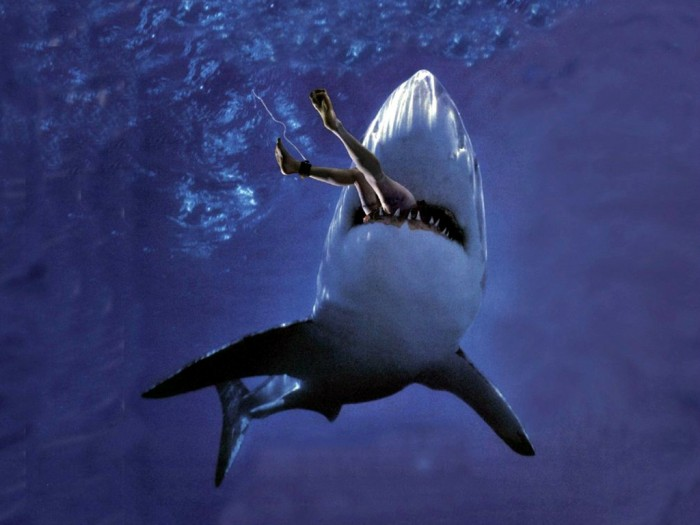 Great-White-Shark-Attack-Wallpaper__yvt2 Is It True: Great White Sharks Should Keep Swimming all the time in Order Not to Drown?