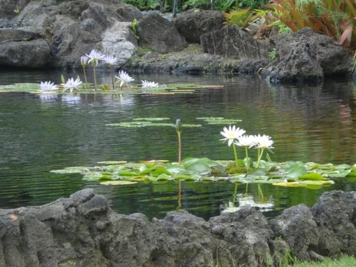Dog Friendly Parks Oahu