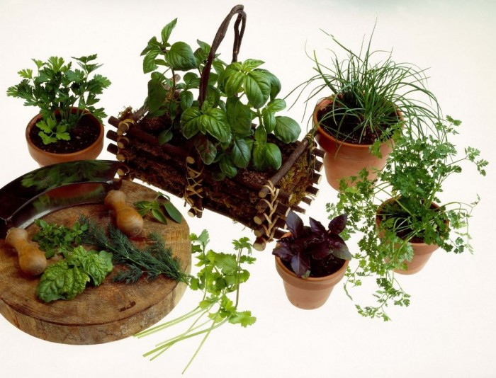 Indoor-Herb-Garden 10 Easy-to-Follow Cooking Tips to Increase Your Savings