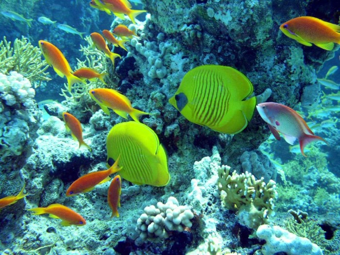 REEFS-OF-SHARM-ELSHEIKH-egypt-is-a-heaven-23968240-1280-960 Top 10 Romantic Vacation Spots for Couples to Enjoy Unforgettable Time