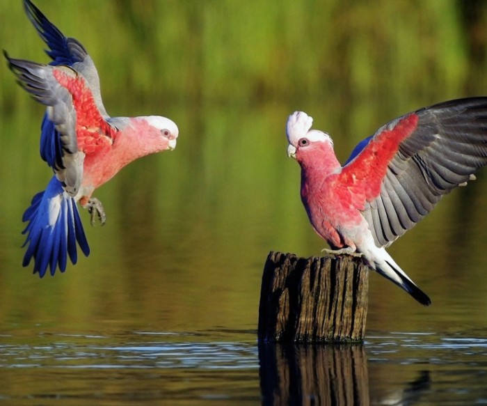 beautiful-birds-wallpaper Improve Your Photography Skills Following These Tips