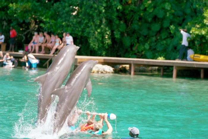 dolphin-cove1 Top 10 Romantic Vacation Spots for Couples to Enjoy Unforgettable Time