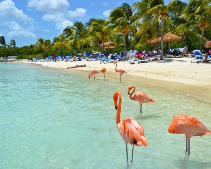 flamingo-beach-aruba-landscape-nature-hd-city-628632 Top 10 Romantic Vacation Spots for Couples to Enjoy Unforgettable Time