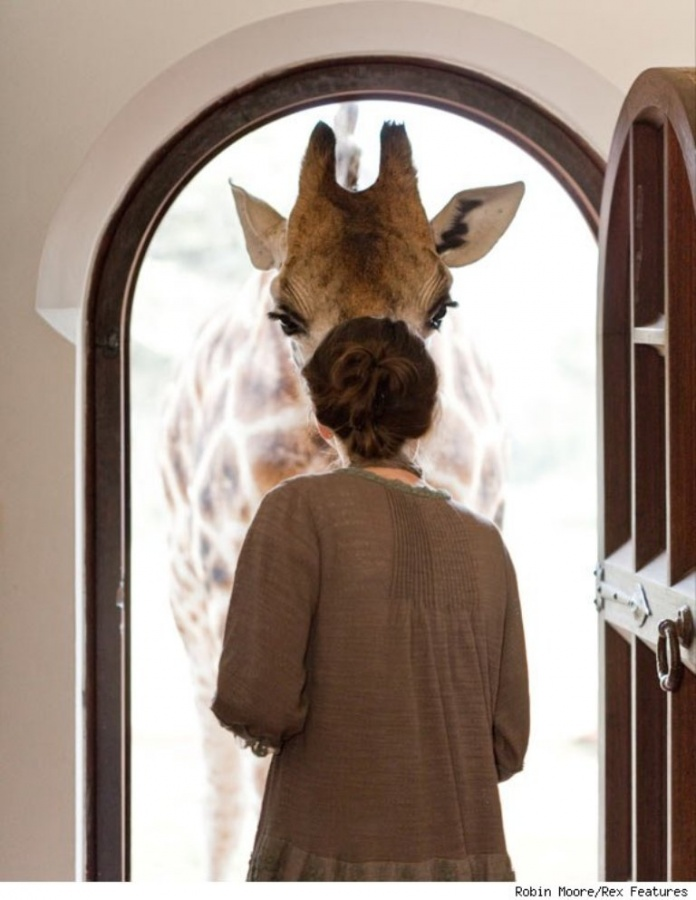 giraffe-manor-window-580cs030811-1299623203 Top 30 World's Weirdest Hotels ... Never Seen Before!