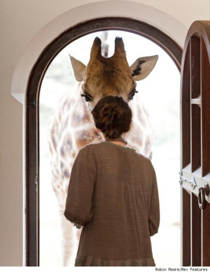 giraffe-manor-window-580cs030811-1299623203 Top 30 World's Weirdest Hotels ... Never Seen Before!