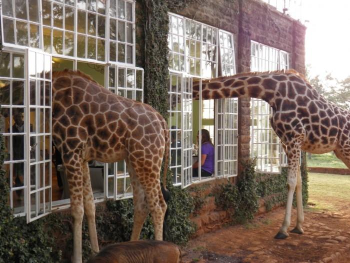 giraffe-manor1 Top 30 World's Weirdest Hotels ... Never Seen Before!