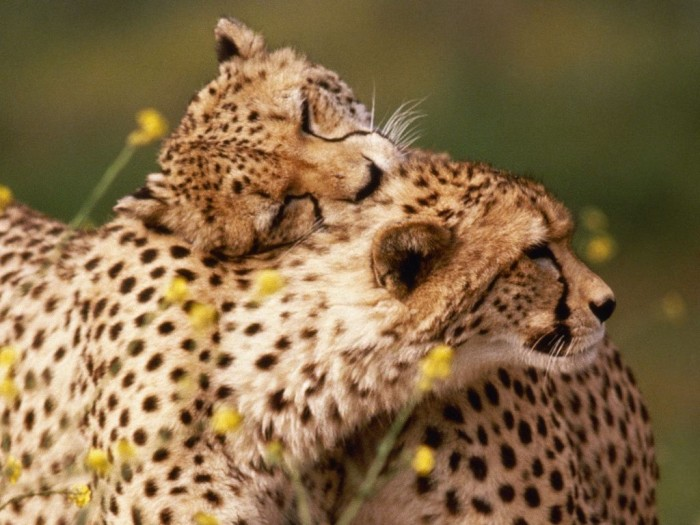 most-beautiful-and-cute-animals-photographs-stuff-kit Improve Your Photography Skills Following These Tips