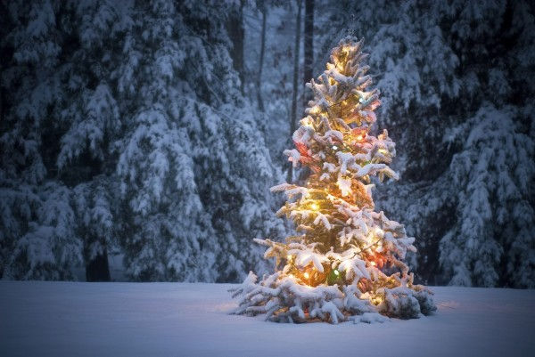 scenic-gleamy-snow-christmas-lights-on-christmas-trees-covered-by-snow-for-beauteous-outdoor-christmas-lights-decor-inspiration-decoration-best-outside-christmas-lights 79 Amazing Christmas Tree Decorations
