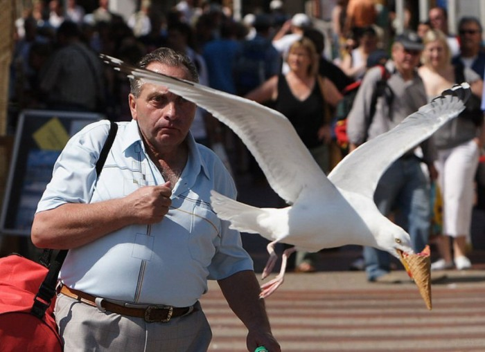 seagull-takes-ice-cream-perfect-timing Improve Your Photography Skills Following These Tips