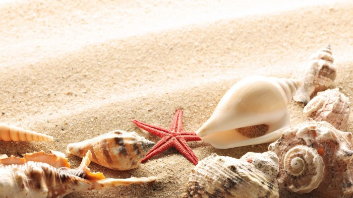 seashells-summer-beach-sand 15 Tips to Help You Save Money on Entertainment