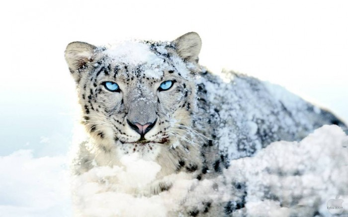 snow-leopard-none...-wallpaper The Remotest Bathroom in the World, Do You Know Where Is It?
