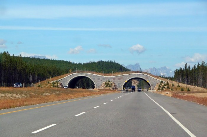 79151031 Have You Ever Seen Breathtaking & Weird Bridges Like These Before?