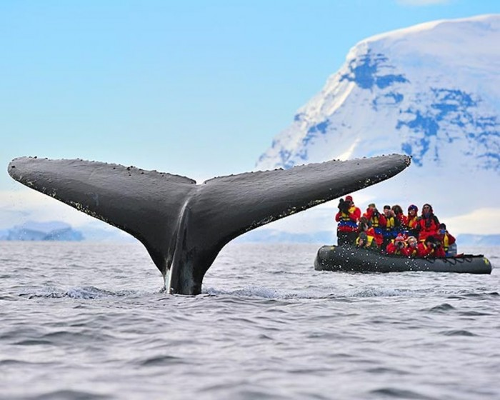 Antarctica-humpback_whale_1596009a Top 10 Best Countries to Visit in the World
